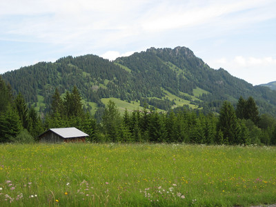 High mountain pastures in Austria, i love the alpine flowers