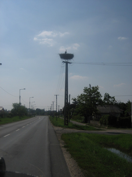 Storks nest in Eastern Hungary, they are huge and underneath many smaller birds nest