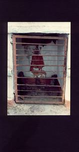gods jailed