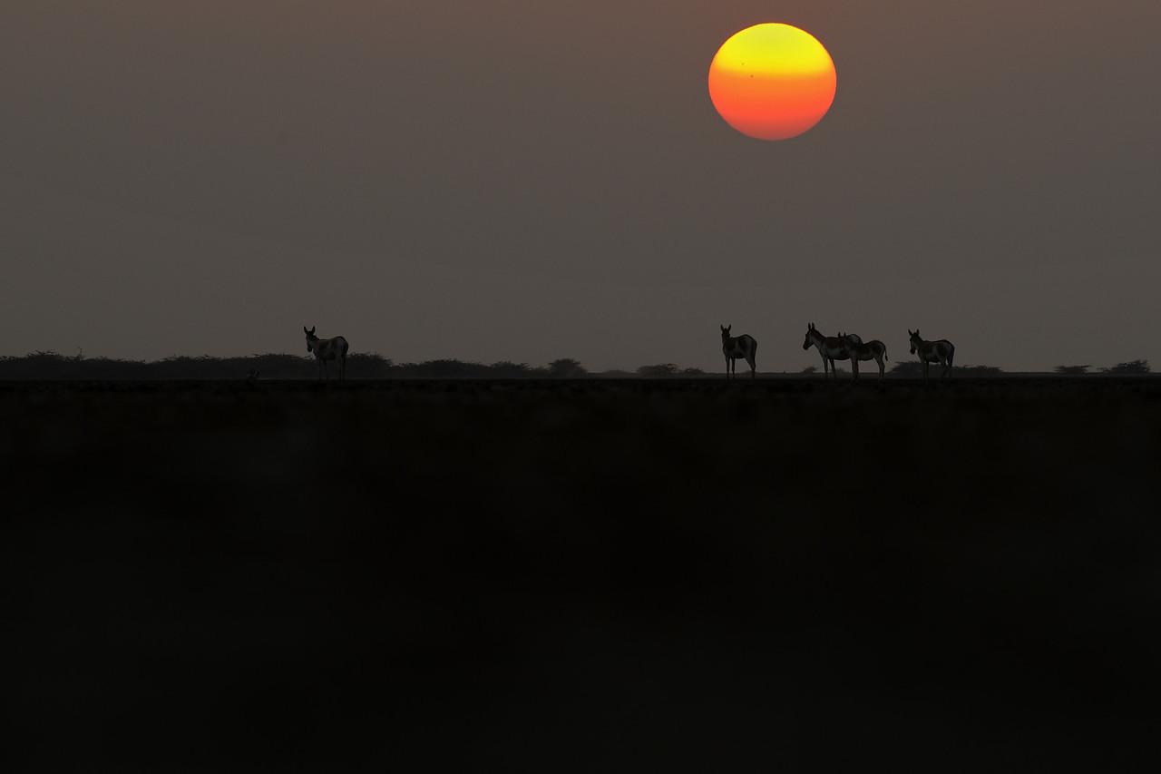Wild Ass Sunset