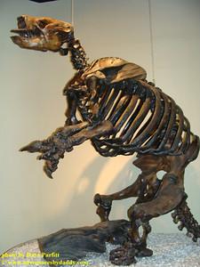 Harlan's ground sloth
