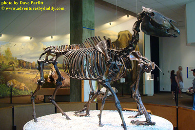 extinct Western horse