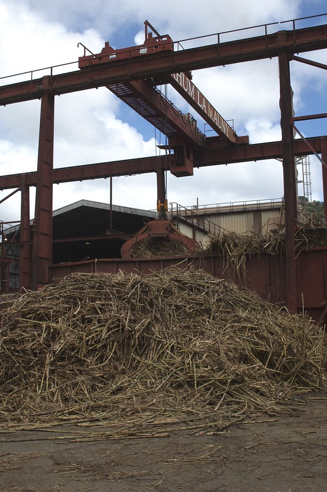 Cane ready to be ground at La Mauny Distillerie.