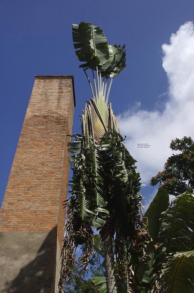 La Pagerie, Martinique 2008
