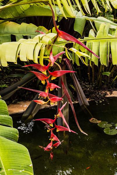La Palma, Canary Islands<br /> Spring flowers
