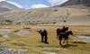 "Taken at Latitude/Longitude:32.828484/78.739835. 16.86 km North-West Pngk Kashmir India <a href=""http://www.geonames.org/maps/google_32.828484_78.739835.html""> (Map link)</a>"