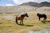 "Taken at Latitude/Longitude:32.828299/78.739961. 16.84 km North-West Pngk Kashmir India <a href=""http://www.geonames.org/maps/google_32.828299_78.739961.html""> (Map link)</a>"