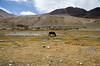 "Taken at Latitude/Longitude:32.827853/78.740354. 16.78 km North-West Pngk Kashmir India <a href=""http://www.geonames.org/maps/google_32.827853_78.740354.html""> (Map link)</a>"