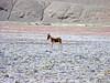"Taken at Latitude/Longitude:33.049283/78.850477. 7.52 km South Rhongo Kashmir India <a href=""http://www.geonames.org/maps/google_33.049283_78.850477.html""> (Map link)</a>"