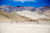 "Taken at Latitude/Longitude:32.914373/78.921873. 15.53 km North-West Hanle Kashmir India <a href=""http://www.geonames.org/maps/google_32.914373_78.921873.html""> (Map link)</a>"