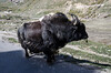 "Taken at Latitude/Longitude:32.411762/77.238572. 1.30 km West Khoksar Himachal Pradesh India <a href=""http://www.geonames.org/maps/google_32.411762_77.238572.html""> (Map link)</a>"