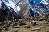 "Taken at Latitude/Longitude:34.053805/76.297647. 2.79 km West Zulidok Kashmir India <a href=""http://www.geonames.org/maps/google_34.053805_76.297647.html""> (Map link)</a>"