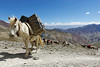 Our pack horses overtook us near the top of the pass
