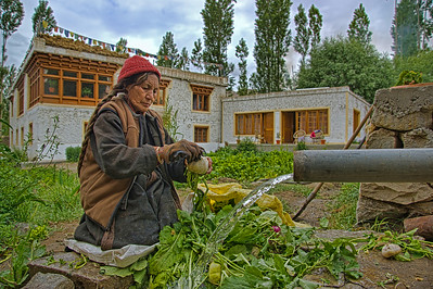 At the hotel we stayed in Leh, they had a lot of vegetable gardens. And this local lady would get up every morning and pick and clean all of them.