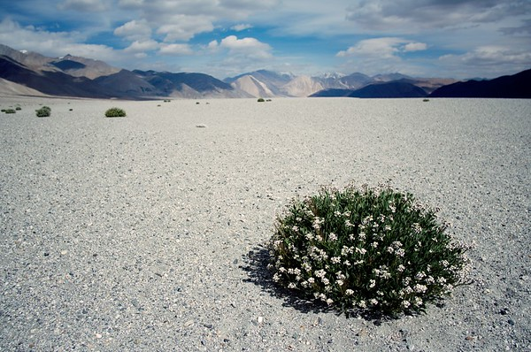 Life (Ladakh)