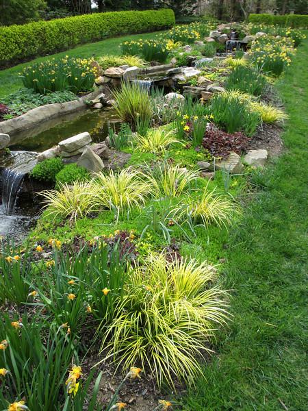 Yellow Garden along the brook.
