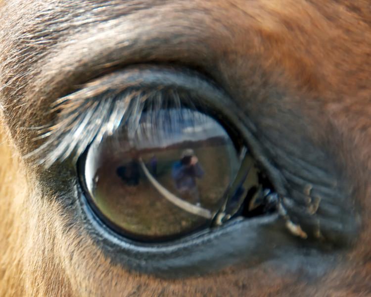 Eye catches reflection of photographer.