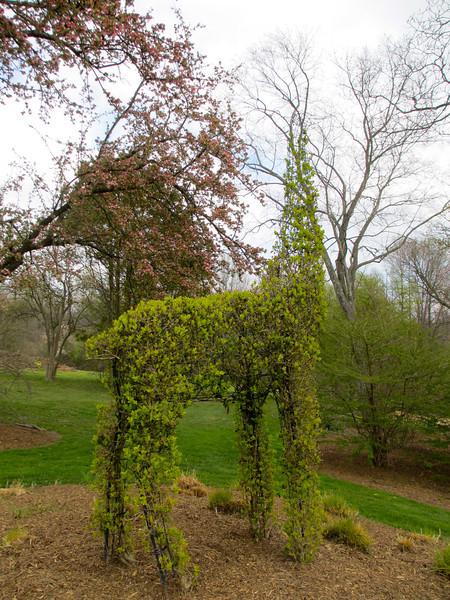 Giraffe topiary still growing.