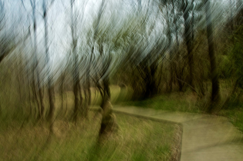 Abstract of path in Nature Walk.