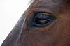Horse's eye.