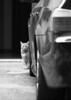 cat&BMW