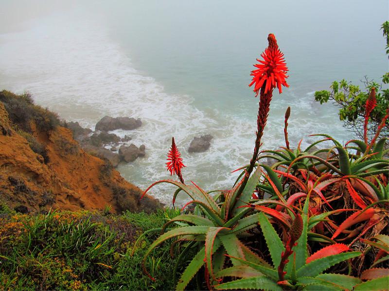 Cresent Bay Laguna Beach California 11.23.12 COpyright Sue Steinbrook