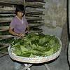 Silkelarver bliver fodret