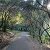 The hiking trail along Lake Chabot in California.