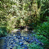 Barnes Creek, looking upstream from trail bridge