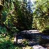 Barnes Creek, looking downstream from trail bridge