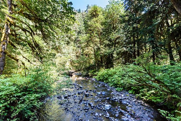 Barnes Creek - feeds Lake Crescent. Looking upstream