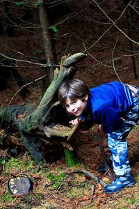Alexander encounters the crocodile tree