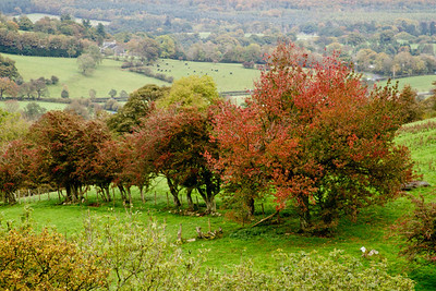 Many of the trees were just beginning to show off their Autumn colours