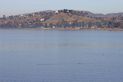 12/11/10 Lake Elsinore (view from levee, with Grebes dotting the lake). Palomar Audubon outing w/Julie Szabo. Riverside County, CA