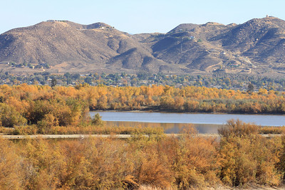 12/11/10 Beautiful fall colors of foliage from willow, cottonwoods & other vegetation along the banks of the levee at Lake Elsinore. Palomar Audubon outing w/Julie Szabo. Riverside County, CA