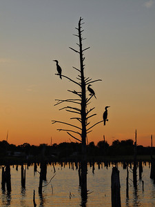 Duck Silhouettes on Lake Fork