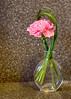 Carnation 5323hd