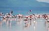 Lake Nakuru0001_109