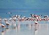 Lake Nakuru0001_110