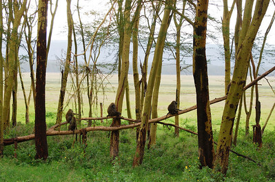 Kenya 2010 Lake Nakuru
