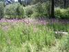 Fun looking pink flowers