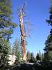 Wicked stump