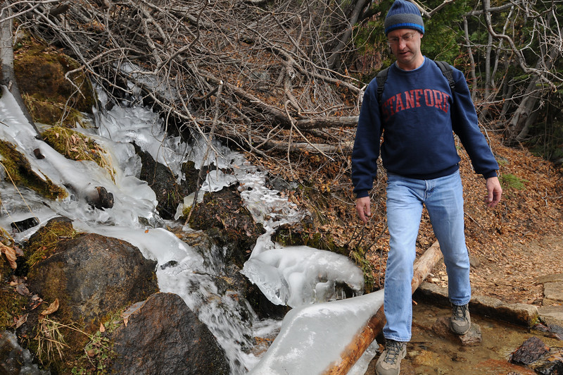 Jay avoiding the ice while crossing a stream.