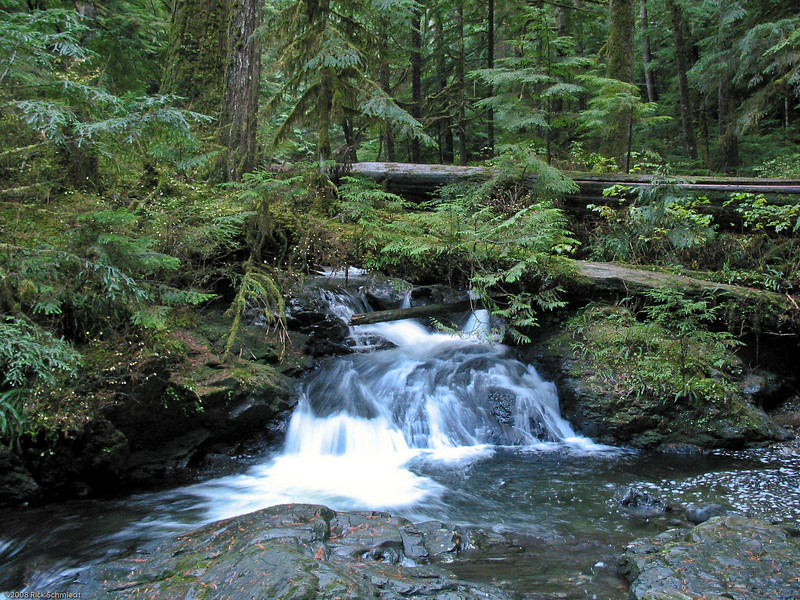 Washington State stream near Seattle.