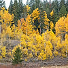 Hope Valley Fall Color