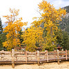 Fall Color at Sand Harbor