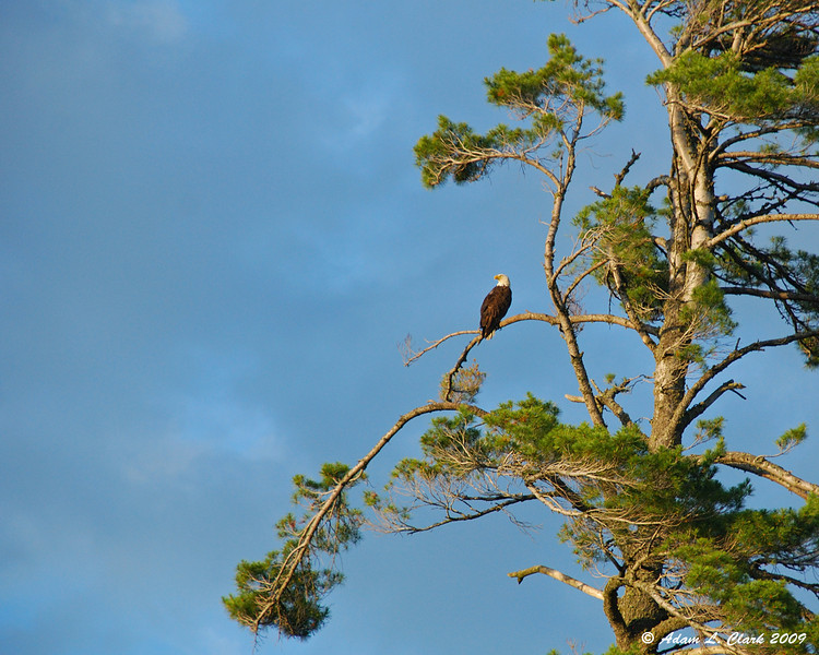 One of the three bald eagles in the area on the way up the river to the lake.
