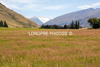 Pasture , MOUNTAINS in Lake Wanaka