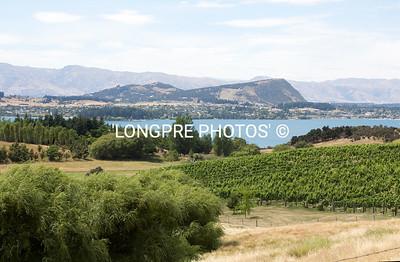 Vineyard view  Lake Wanaka area