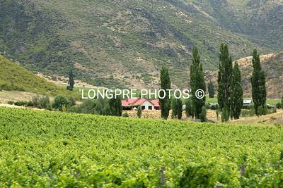 Winery in Lake Wanaka region.